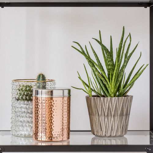 Plants and Containers on Glass Shelves.